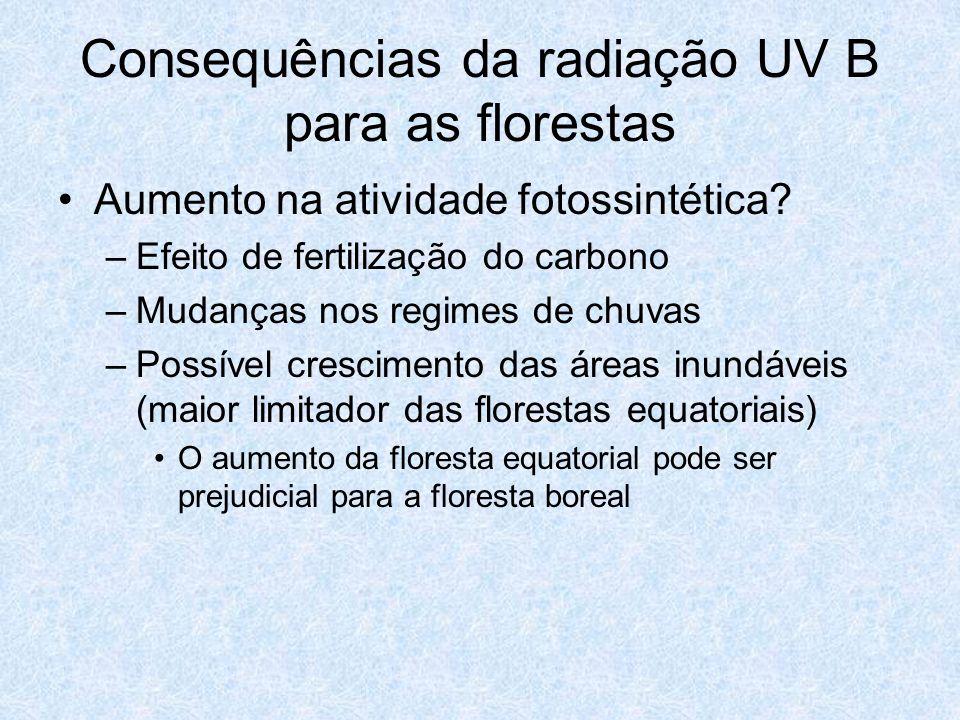 Consequências da radiação UV B para as florestas Aumento na atividade fotossintética? –Efeito de fertilização do carbono –Mudanças nos regimes de chuv