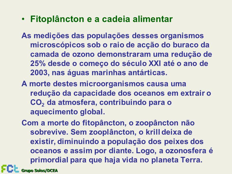 Grupo Solos/DCEA Fitoplâncton e a cadeia alimentar As medições das populações desses organismos microscópicos sob o raio de acção do buraco da camada