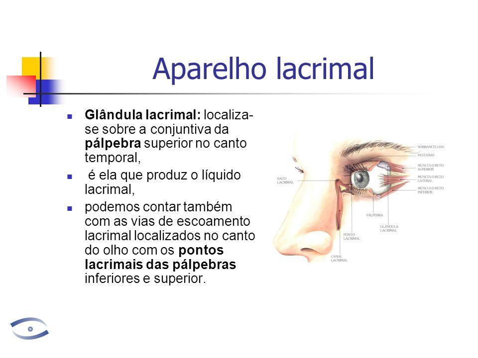 Aparelho lacrimal Glândula lacrimal: localiza- se sobre a conjuntiva da pálpebra superior no canto temporal, é ela que produz o líquido lacrimal, podemos contar também com as vias de escoamento lacrimal localizados no canto do olho com os pontos lacrimais das pálpebras inferiores e superior.