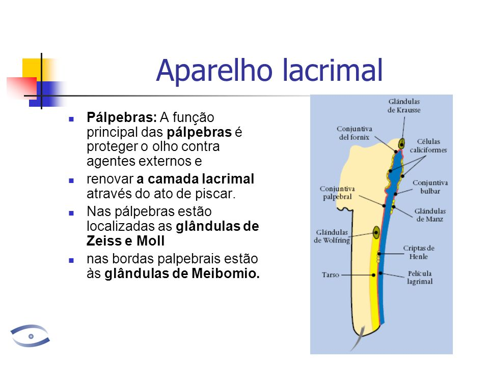 Aparelho lacrimal Pálpebras: A função principal das pálpebras é proteger o olho contra agentes externos e renovar a camada lacrimal através do ato de