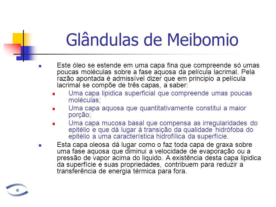 Glândulas de Meibomio Este óleo se estende em uma capa fina que compreende só umas poucas moléculas sobre a fase aquosa da película lacrimal.