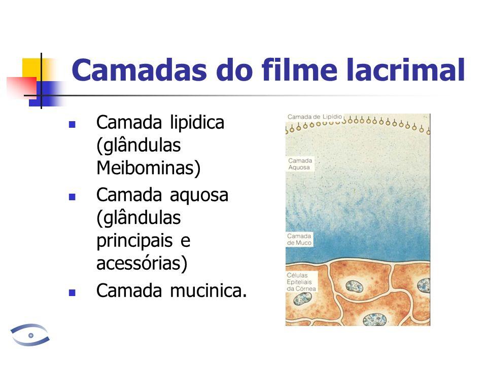 Camadas do filme lacrimal Camada lipidica (glândulas Meibominas) Camada aquosa (glândulas principais e acessórias) Camada mucinica.