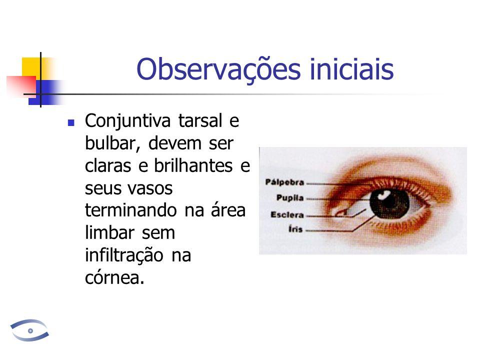 Observações iniciais Conjuntiva tarsal e bulbar, devem ser claras e brilhantes e seus vasos terminando na área limbar sem infiltração na córnea.