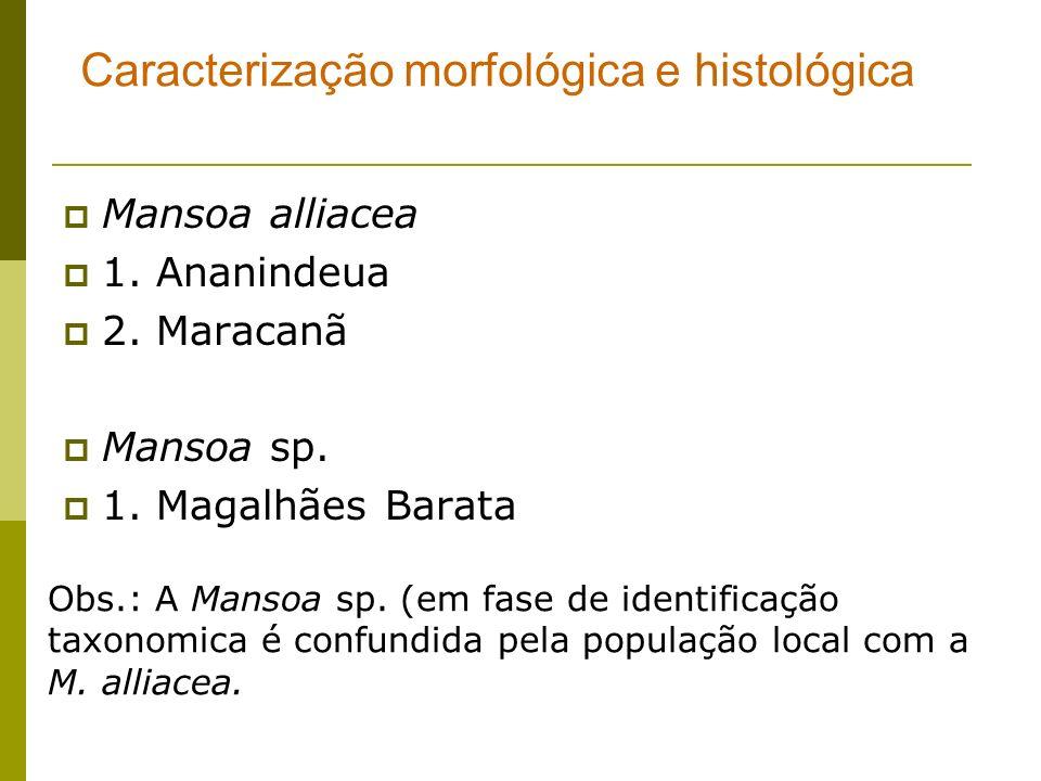 Mansoa alliacea 1. Ananindeua 2. Maracanã Mansoa sp. 1. Magalhães Barata Caracterização morfológica e histológica Obs.: A Mansoa sp. (em fase de ident