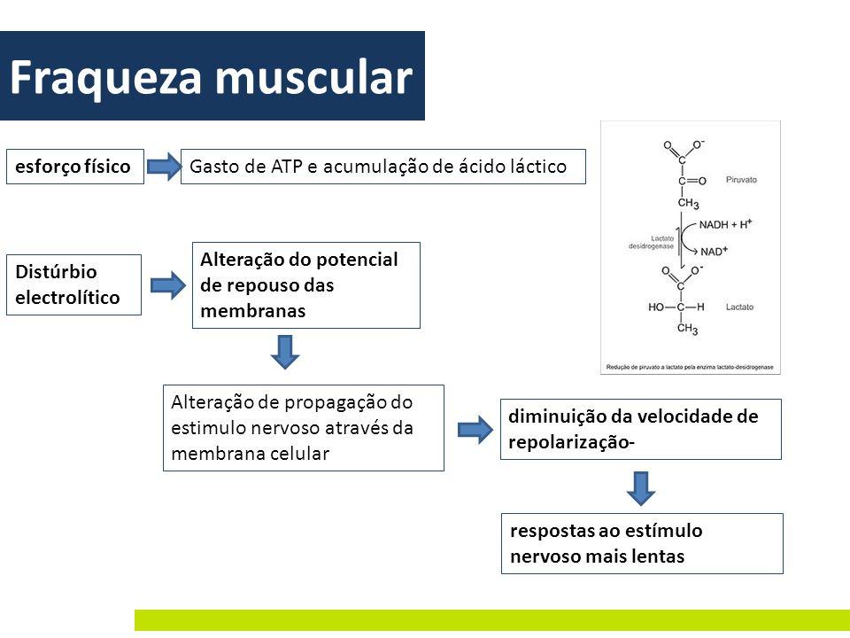 Fraqueza muscular esforço físico Gasto de ATP e acumulação de ácido láctico Distúrbio electrolítico Alteração do potencial de repouso das membranas Al