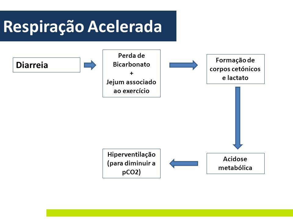 Respiração Acelerada Diarreia Perda de Bicarbonato + Jejum associado ao exercício Formação de corpos cetónicos e lactato Acidose metabólica Hiperventi