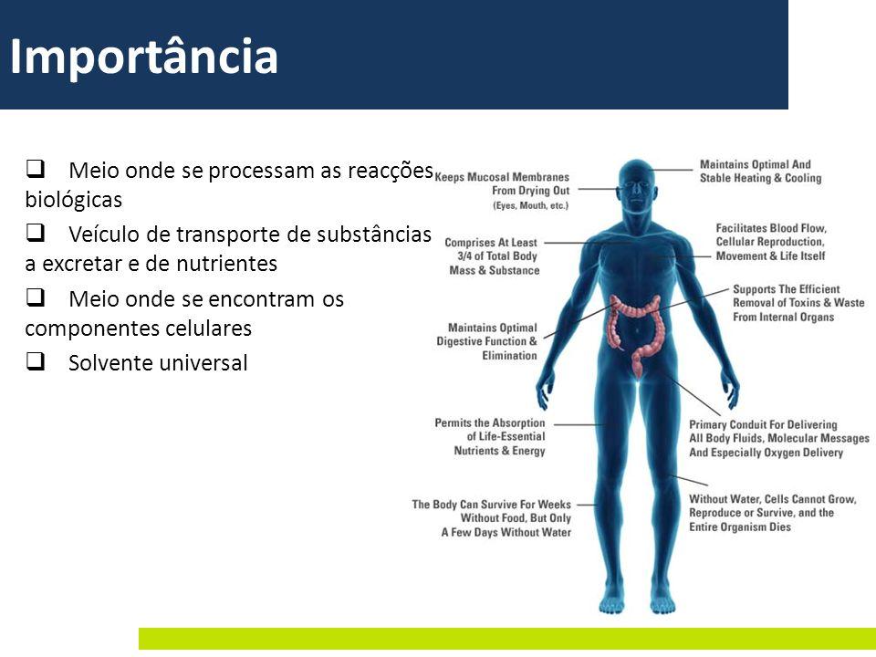 Meio onde se processam as reacções biológicas Veículo de transporte de substâncias a excretar e de nutrientes Meio onde se encontram os componentes ce