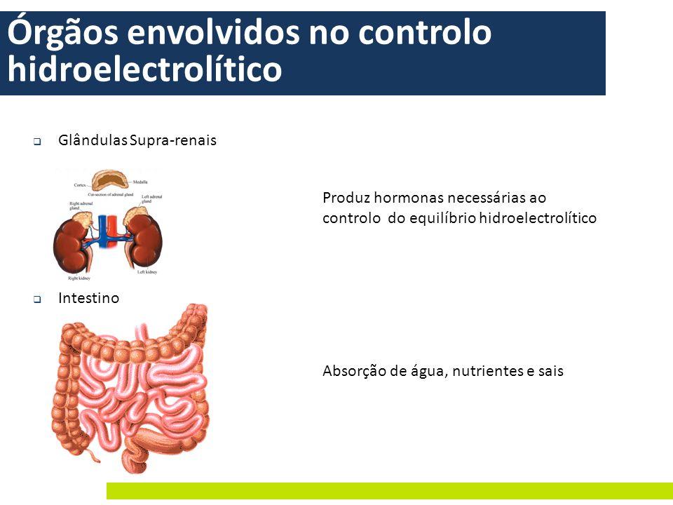 Órgãos envolvidos no controlo hidroelectrolítico Glândulas Supra-renais Intestino Absorção de água, nutrientes e sais Produz hormonas necessárias ao c