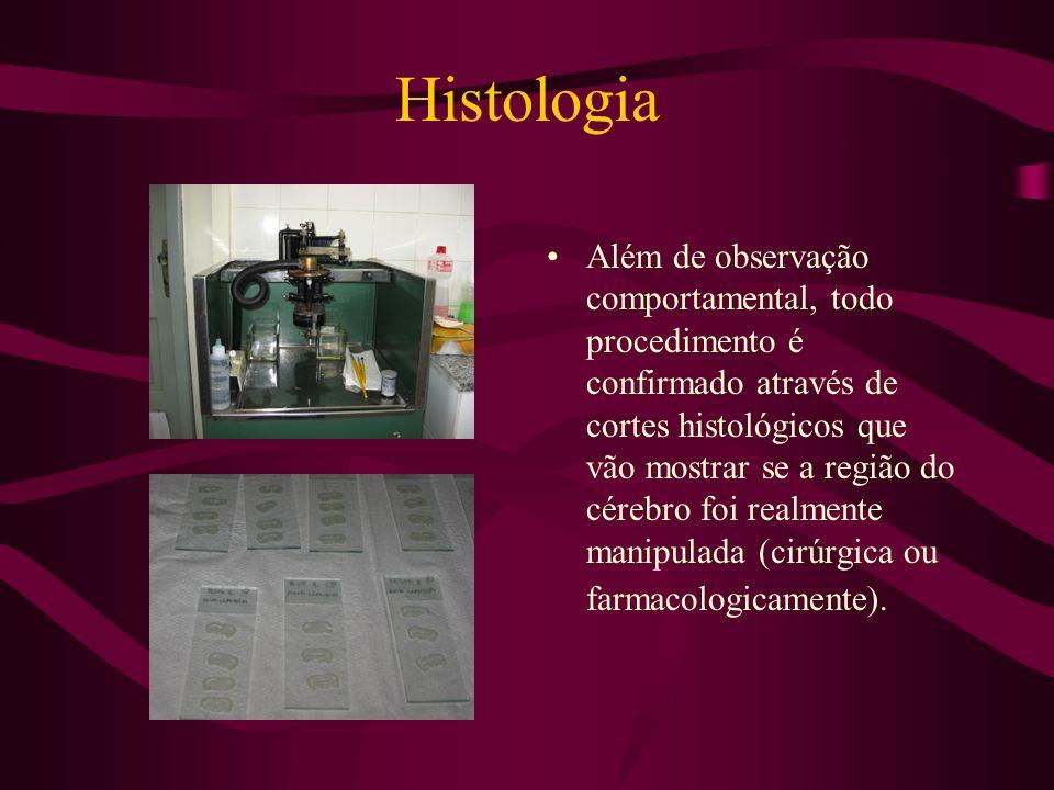 Histologia Além de observação comportamental, todo procedimento é confirmado através de cortes histológicos que vão mostrar se a região do cérebro foi
