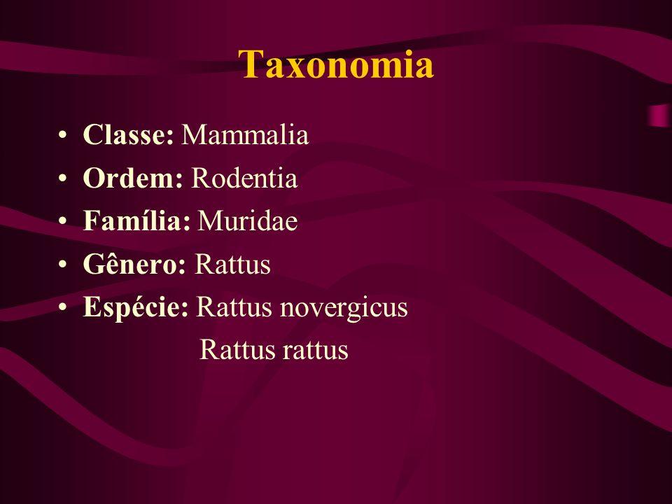 Taxonomia Classe: Mammalia Ordem: Rodentia Família: Muridae Gênero: Rattus Espécie: Rattus novergicus Rattus rattus