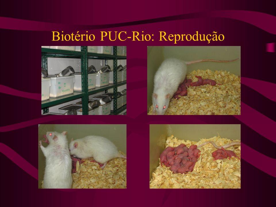 Biotério PUC-Rio: Reprodução