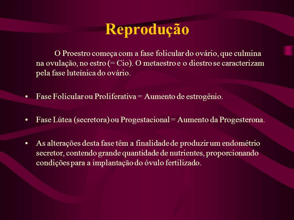 Reprodução O Proestro começa com a fase folicular do ovário, que culmina na ovulação, no estro (= Cio). O metaestro e o diestro se caracterizam pela f