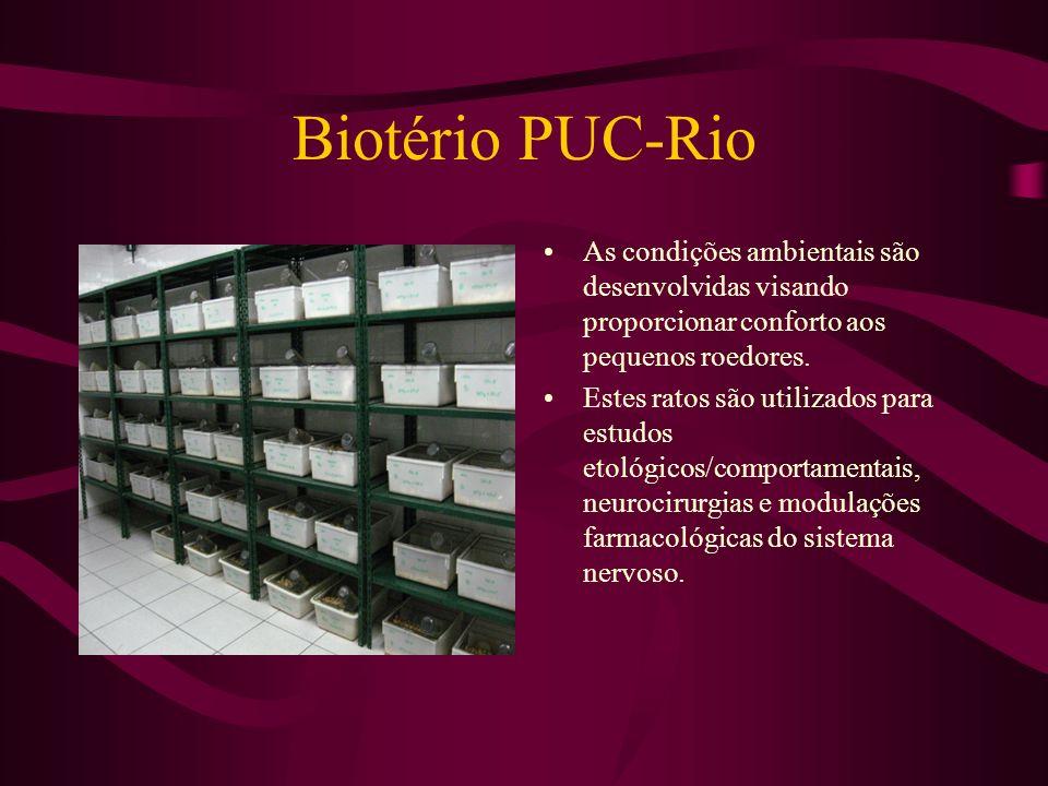 Biotério PUC-Rio As condições ambientais são desenvolvidas visando proporcionar conforto aos pequenos roedores. Estes ratos são utilizados para estudo