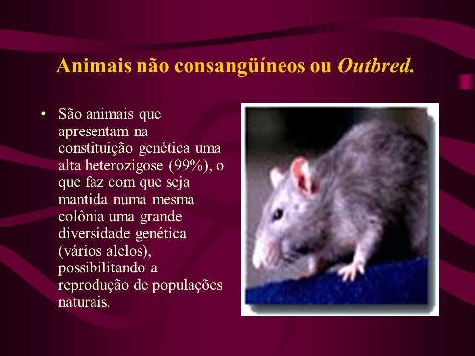 Animais não consangüíneos ou Outbred. São animais que apresentam na constituição genética uma alta heterozigose (99%), o que faz com que seja mantida