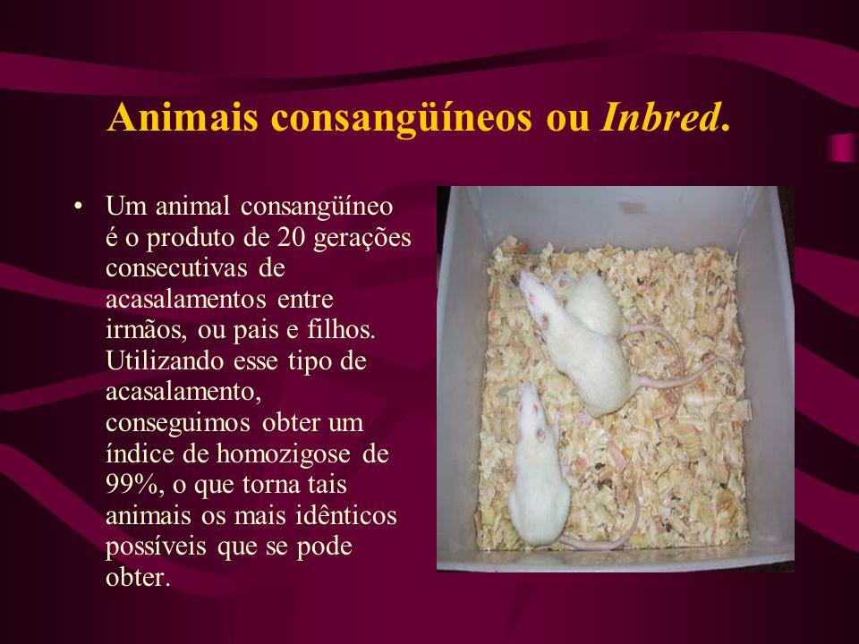 Animais consangüíneos ou Inbred. Um animal consangüíneo é o produto de 20 gerações consecutivas de acasalamentos entre irmãos, ou pais e filhos. Utili