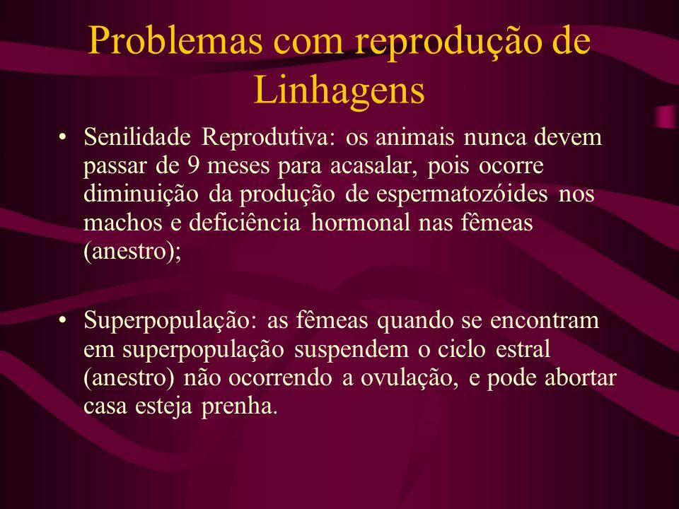 Problemas com reprodução de Linhagens Senilidade Reprodutiva: os animais nunca devem passar de 9 meses para acasalar, pois ocorre diminuição da produç