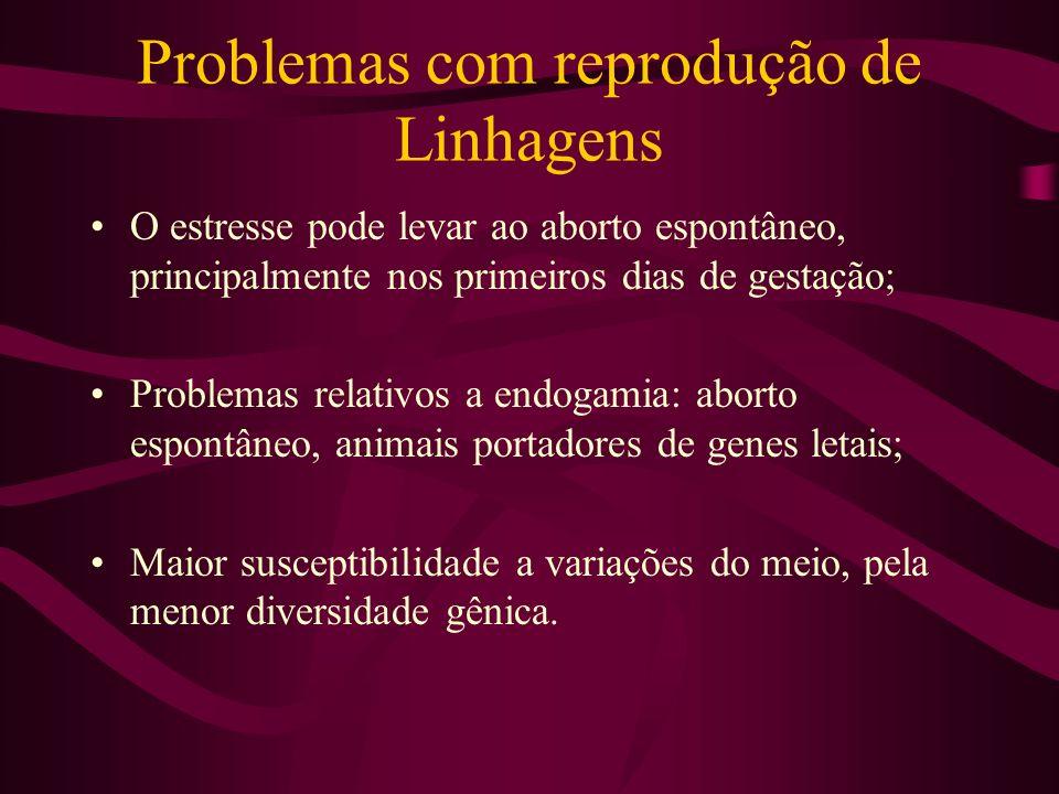 Problemas com reprodução de Linhagens O estresse pode levar ao aborto espontâneo, principalmente nos primeiros dias de gestação; Problemas relativos a