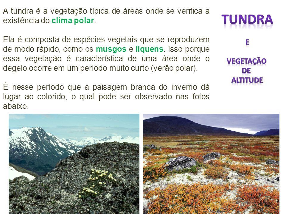 A tundra é a vegetação típica de áreas onde se verifica a existência do clima polar. Ela é composta de espécies vegetais que se reproduzem de modo ráp