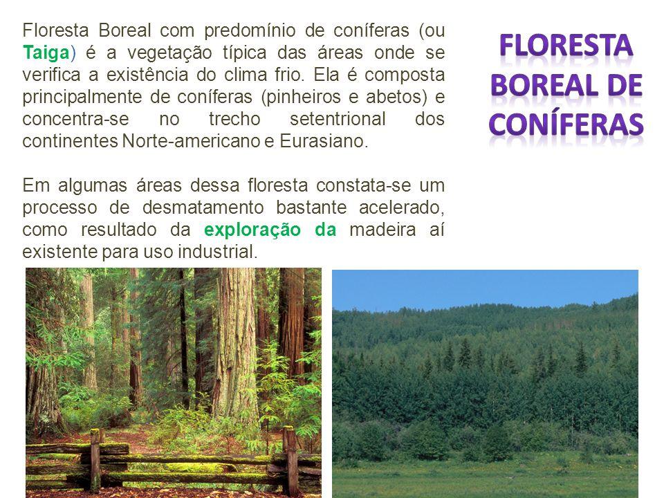 Floresta Boreal com predomínio de coníferas (ou Taiga) é a vegetação típica das áreas onde se verifica a existência do clima frio. Ela é composta prin