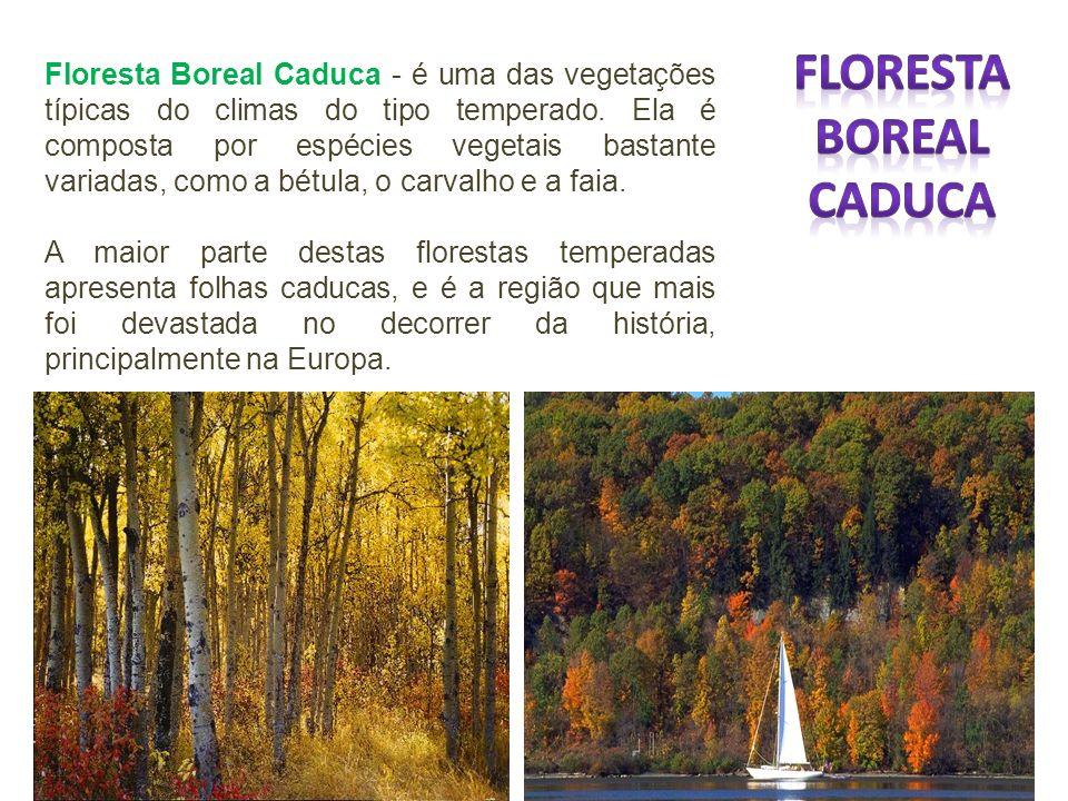 Floresta Boreal Caduca - é uma das vegetações típicas do climas do tipo temperado. Ela é composta por espécies vegetais bastante variadas, como a bétu