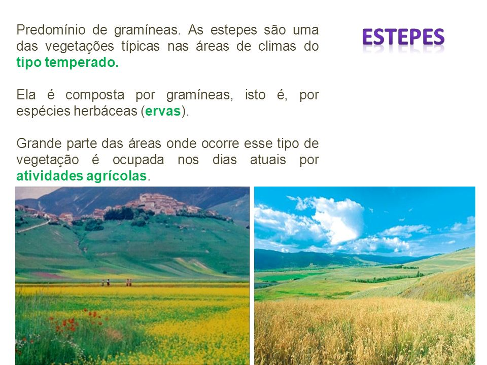 Predomínio de gramíneas. As estepes são uma das vegetações típicas nas áreas de climas do tipo temperado. Ela é composta por gramíneas, isto é, por es