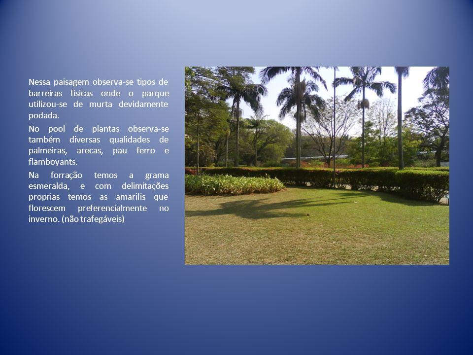 Cicas Nome Científico: Cycas revoluta Nome Popular: Cica, sagu, palmeira- sagu Origem: Japão e Indonésia Vedete dos jardins contemporâneos e tropicais, a cica se parece com uma palmeira.