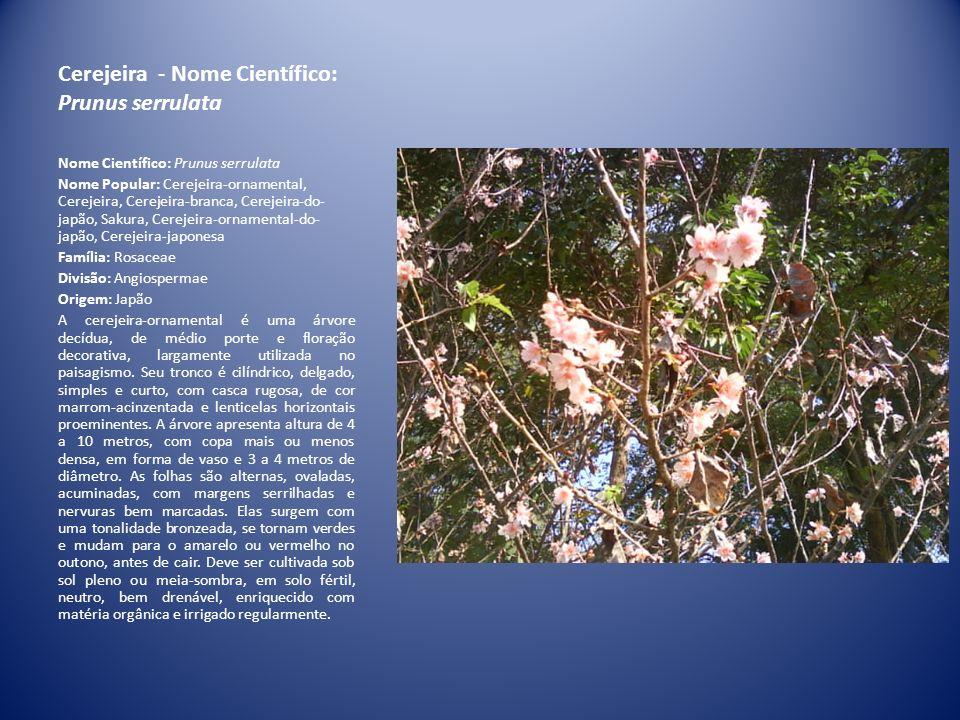 DRACENAS Planta ornamental fiável e resistente, excelente para interiores.