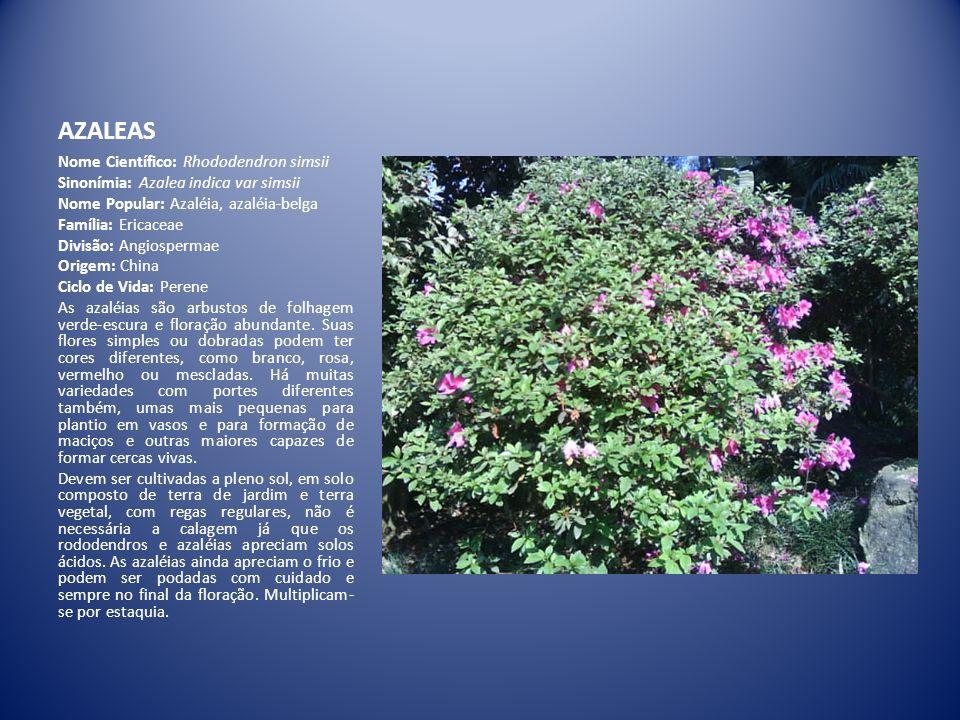 AZALEAS Nome Científico: Rhododendron simsii Sinonímia: Azalea indica var simsii Nome Popular: Azaléia, azaléia-belga Família: Ericaceae Divisão: Angi