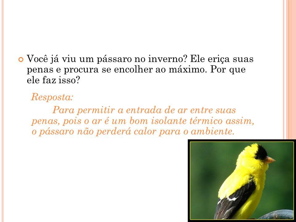 Você já viu um pássaro no inverno.Ele eriça suas penas e procura se encolher ao máximo.
