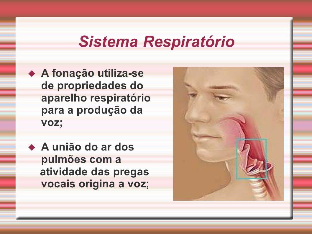 Sistema Respiratório A fonação utiliza-se de propriedades do aparelho respiratório para a produção da voz; A união do ar dos pulmões com a atividade d