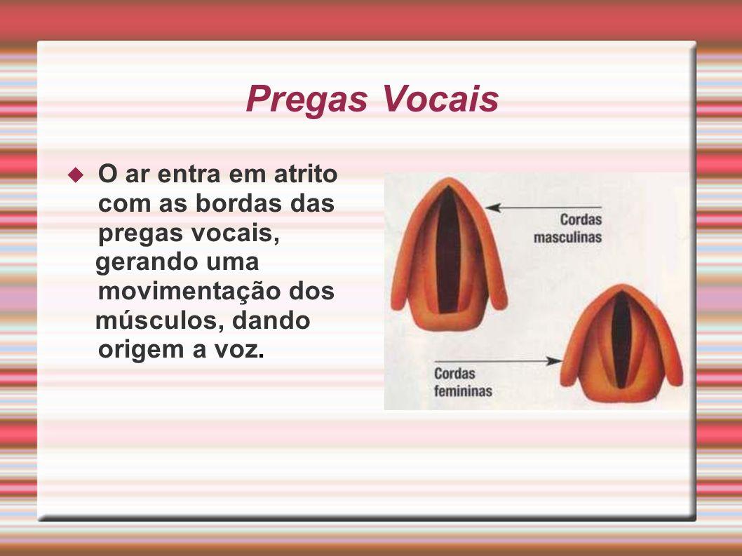 Pregas Vocais O ar entra em atrito com as bordas das pregas vocais, gerando uma movimentação dos músculos, dando origem a voz.