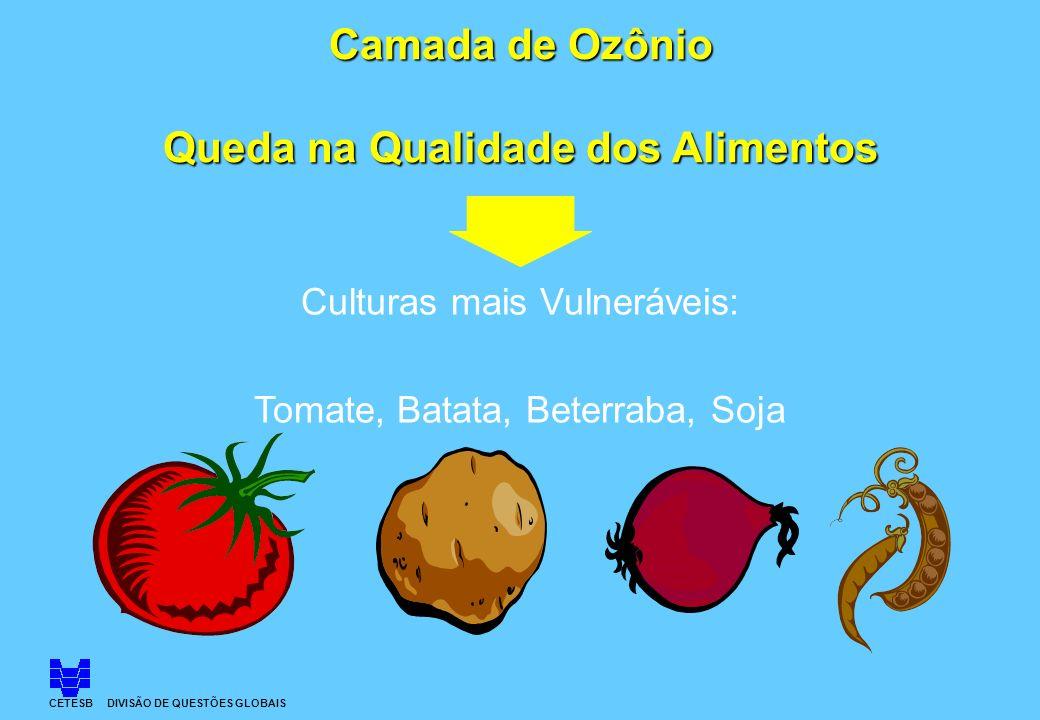Camada de Ozônio Queda na Qualidade dos Alimentos Culturas mais Vulneráveis: Tomate, Batata, Beterraba, Soja CETESB DIVISÃO DE QUESTÕES GLOBAIS