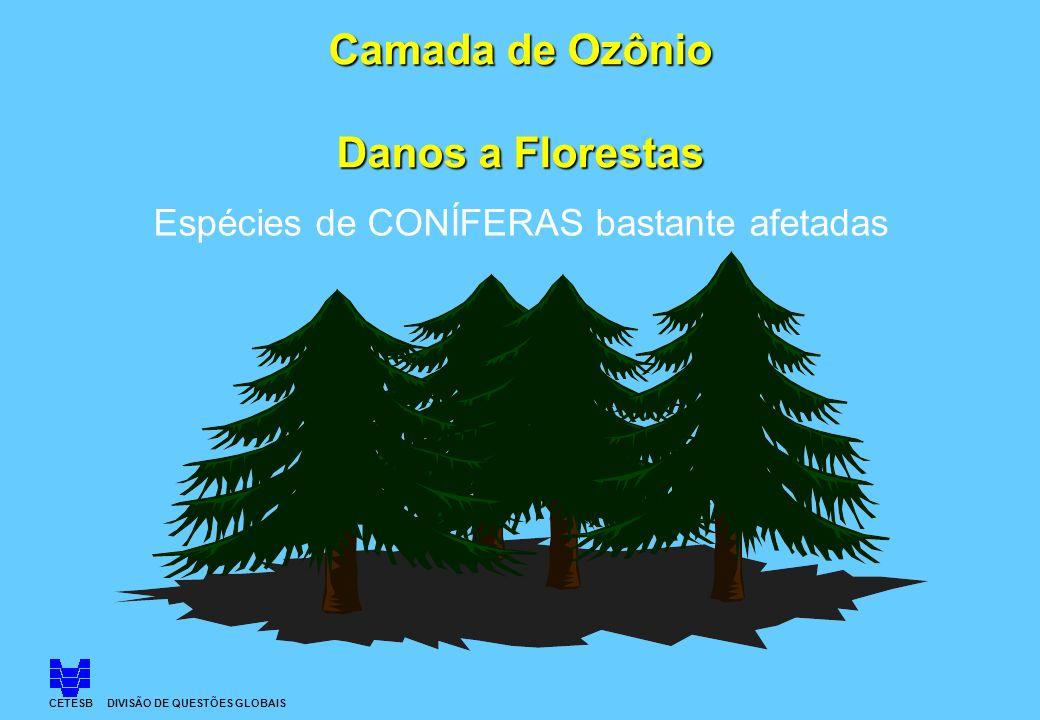 Camada de Ozônio Danos a Florestas Espécies de CONÍFERAS bastante afetadas CETESB DIVISÃO DE QUESTÕES GLOBAIS