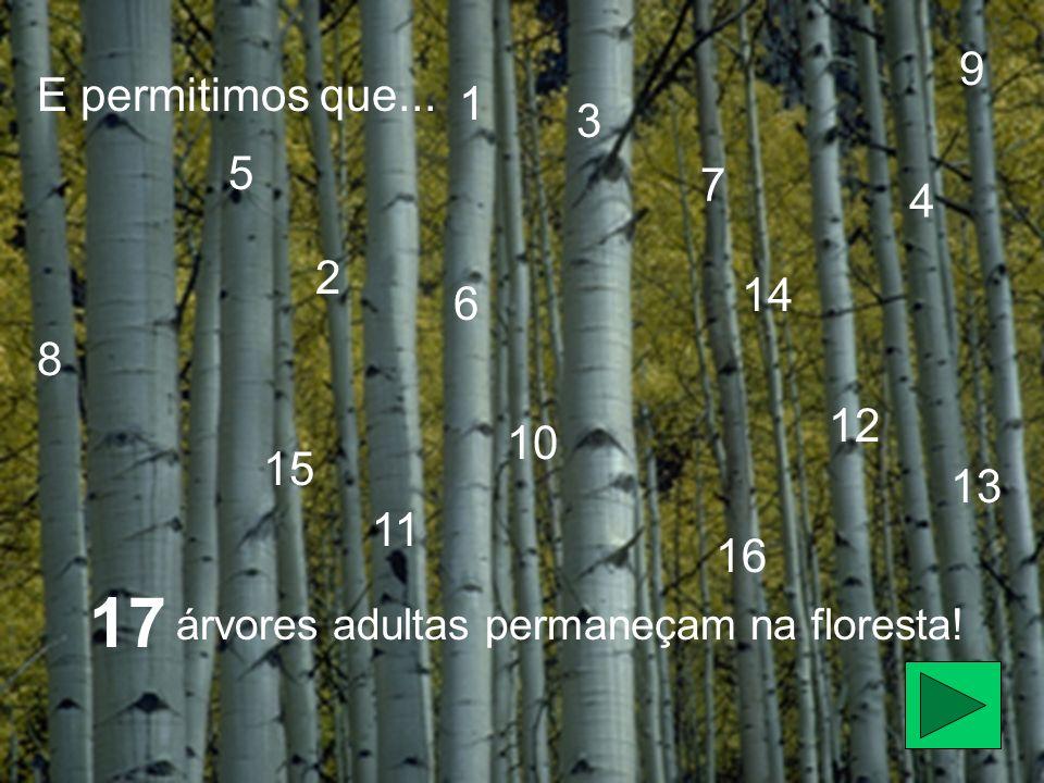 E permitimos que... árvores adultas permaneçam na floresta! 1 2 3 4 5 6 7 8 9 10 11 12 13 14 15 16 17