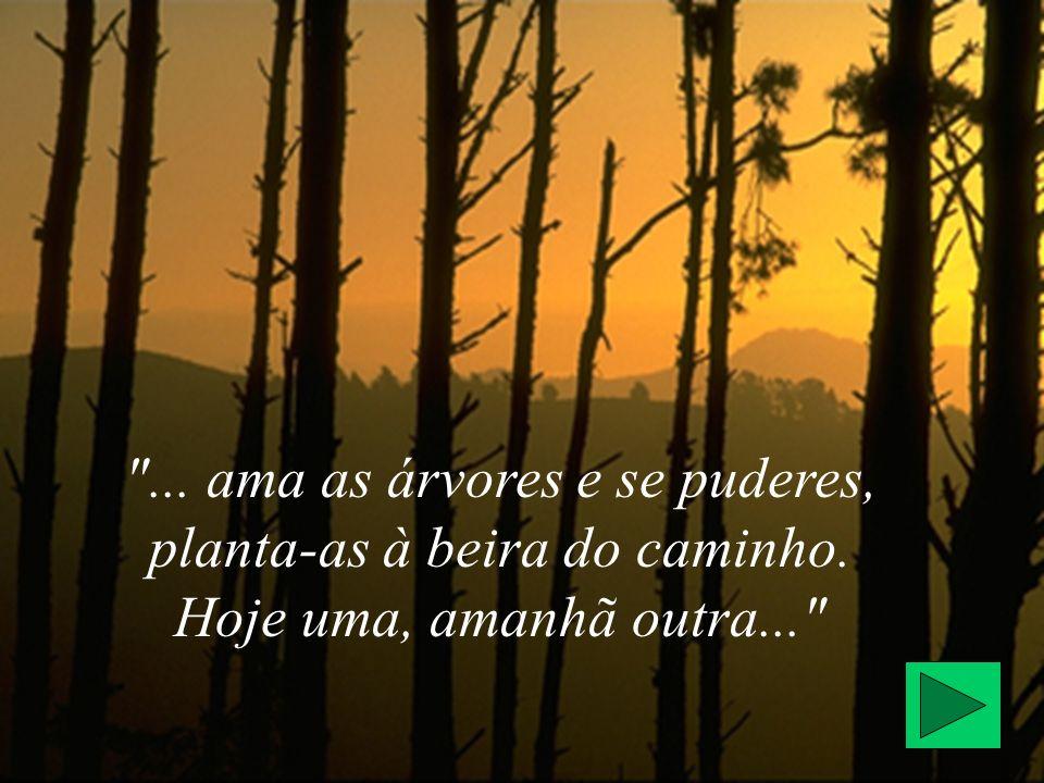 ... ama as árvores e se puderes, planta-as à beira do caminho. Hoje uma, amanhã outra...
