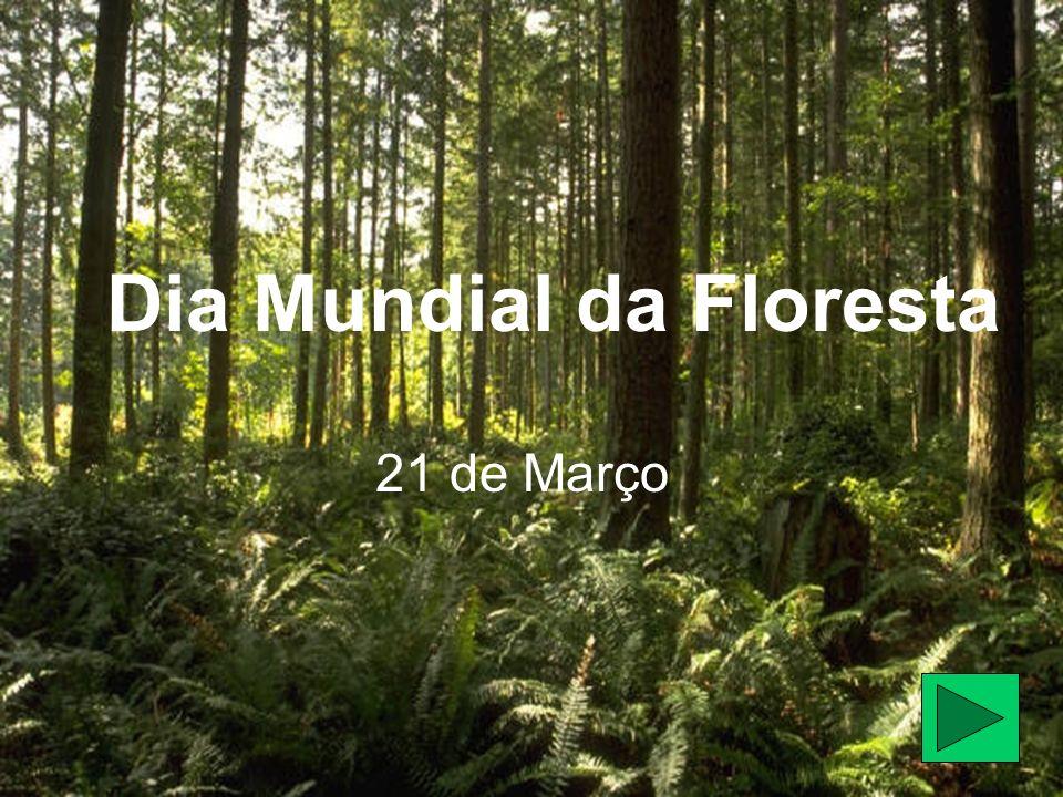 E permitimos que...árvores adultas permaneçam na floresta.
