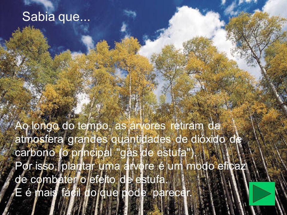 Ao longo do tempo, as árvores retiram da atmosfera grandes quantidades de dióxido de carbono (o principal