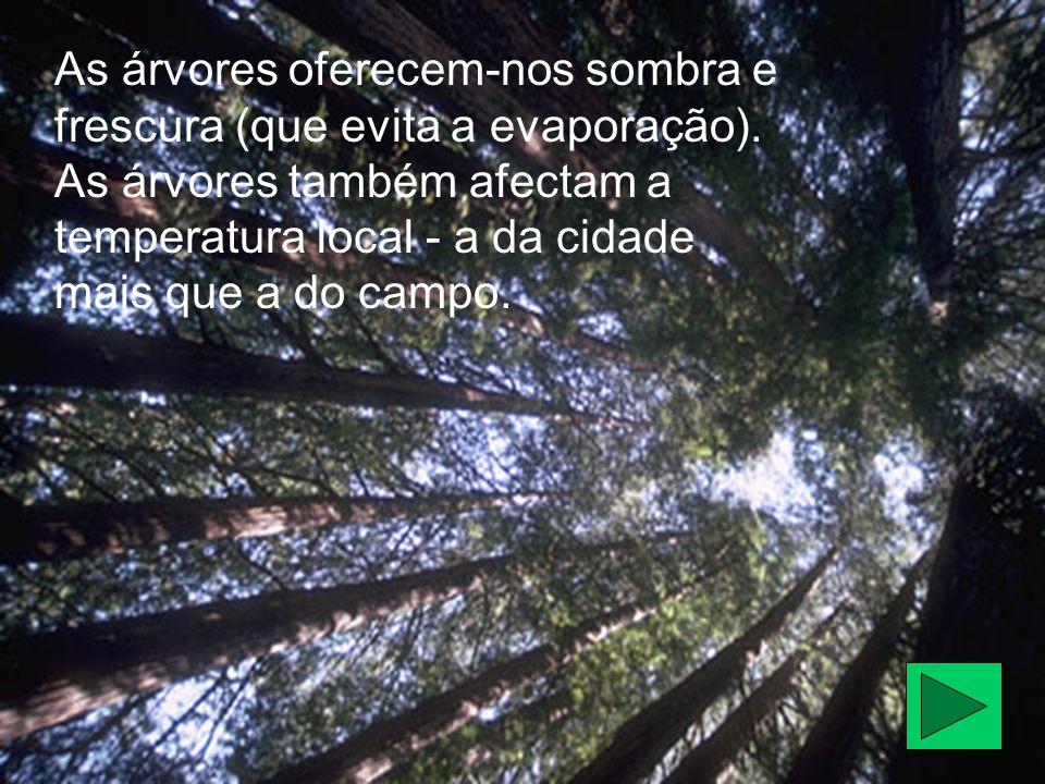 As árvores oferecem-nos sombra e frescura (que evita a evaporação). As árvores também afectam a temperatura local - a da cidade mais que a do campo.