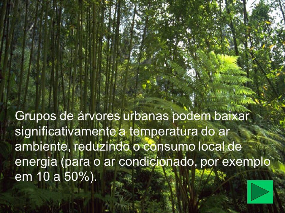 Grupos de árvores urbanas podem baixar significativamente a temperatura do ar ambiente, reduzindo o consumo local de energia (para o ar condicionado,