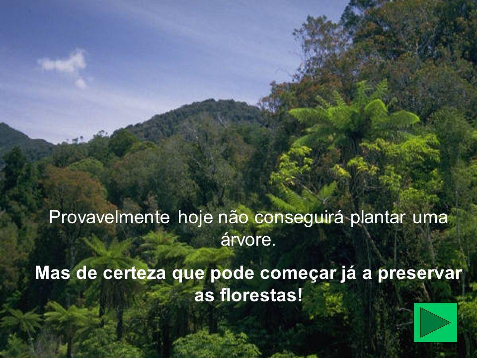 Provavelmente hoje não conseguirá plantar uma árvore. Mas de certeza que pode começar já a preservar as florestas!