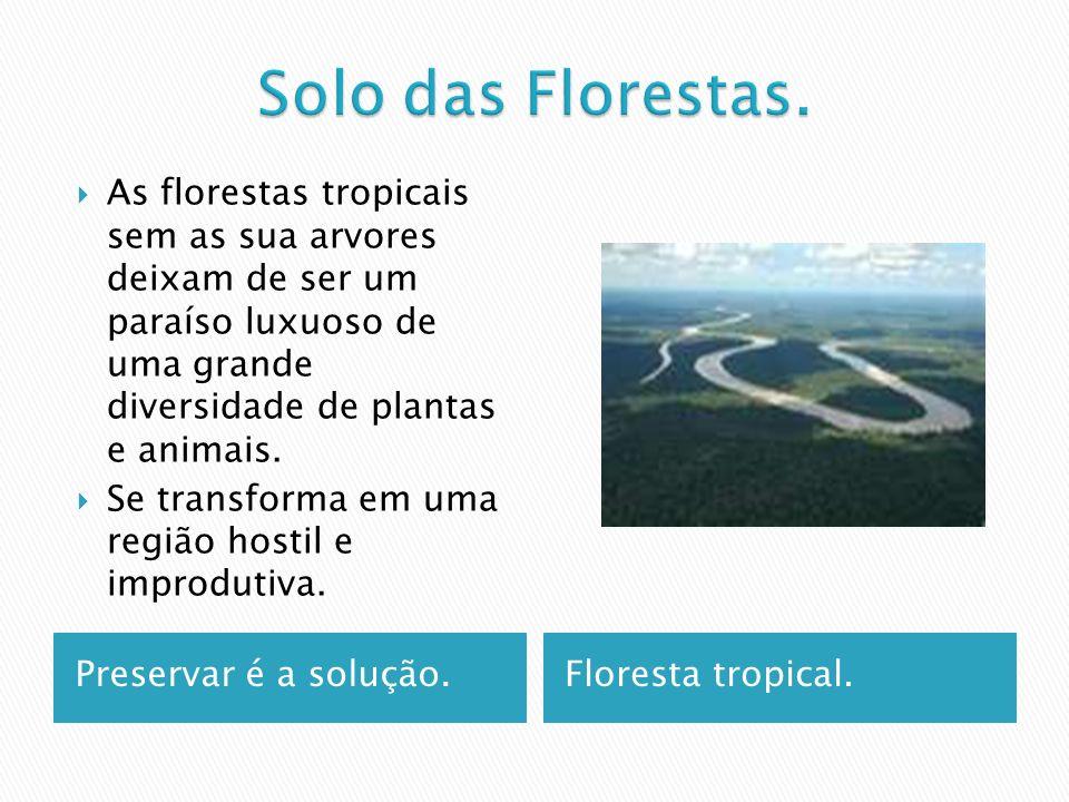 Preservar é a solução.Floresta tropical.