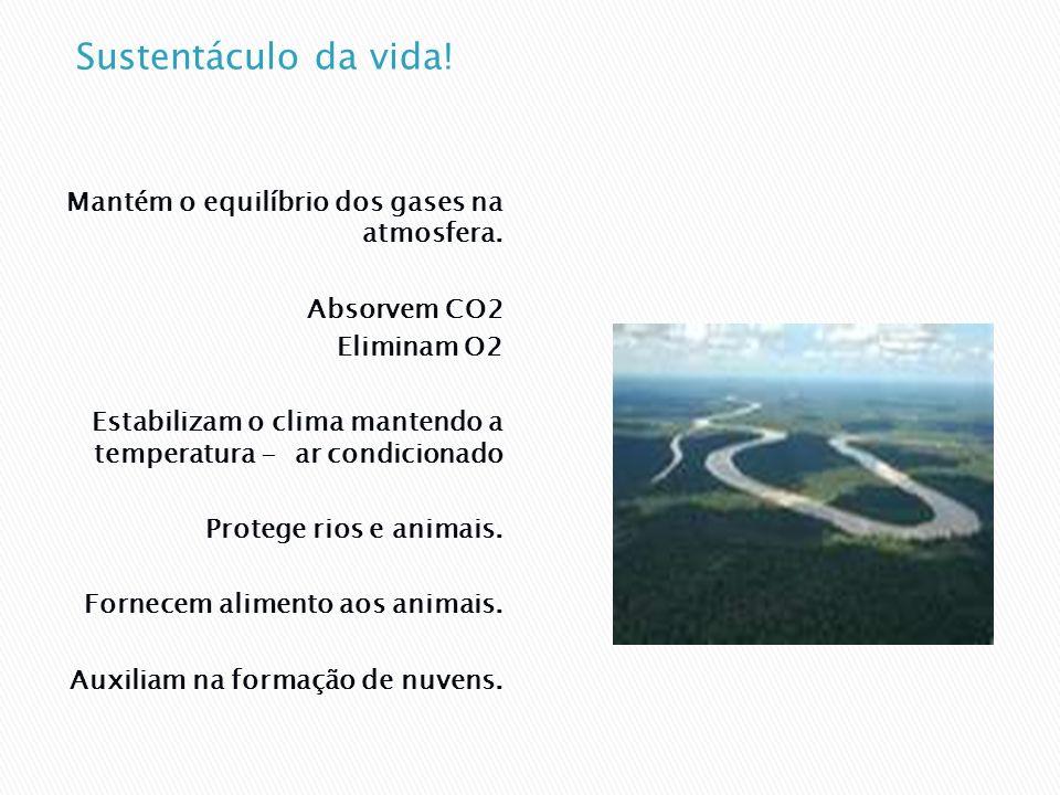 Os solos das florestas são superficiais e frágeis.