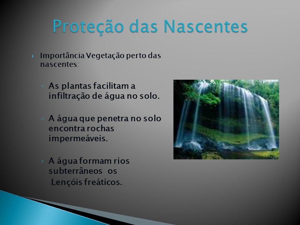Importância Vegetação perto das nascentes: As plantas facilitam a infiltração de água no solo.
