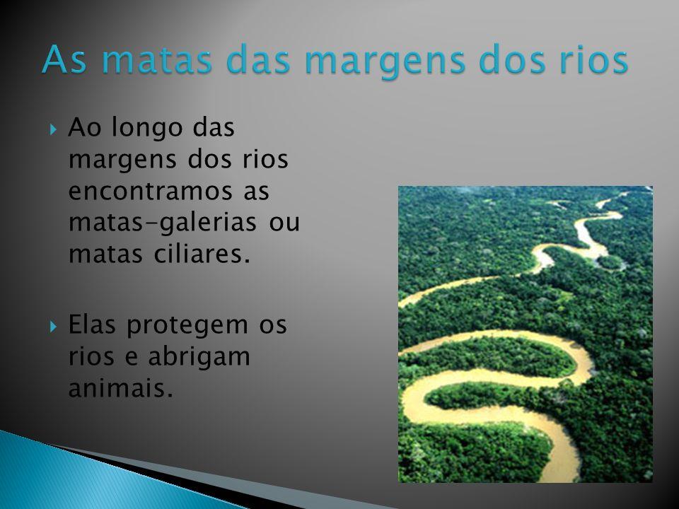 Ao longo das margens dos rios encontramos as matas-galerias ou matas ciliares.