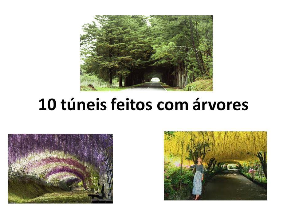 10 túneis feitos com árvores