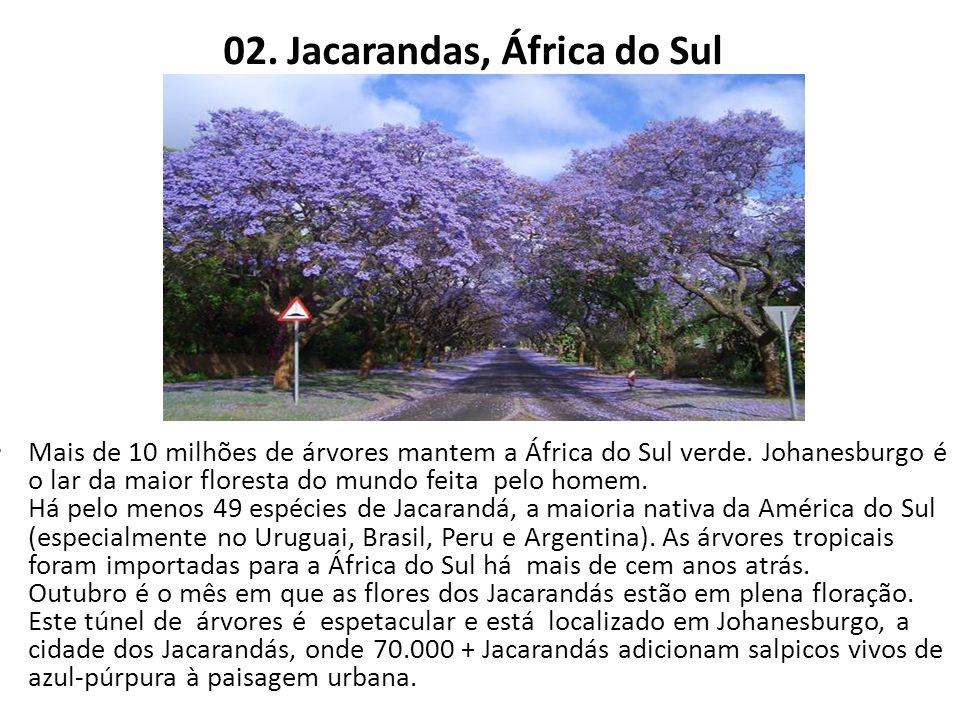 02. Jacarandas, África do Sul Mais de 10 milhões de árvores mantem a África do Sul verde. Johanesburgo é o lar da maior floresta do mundo feita pelo h