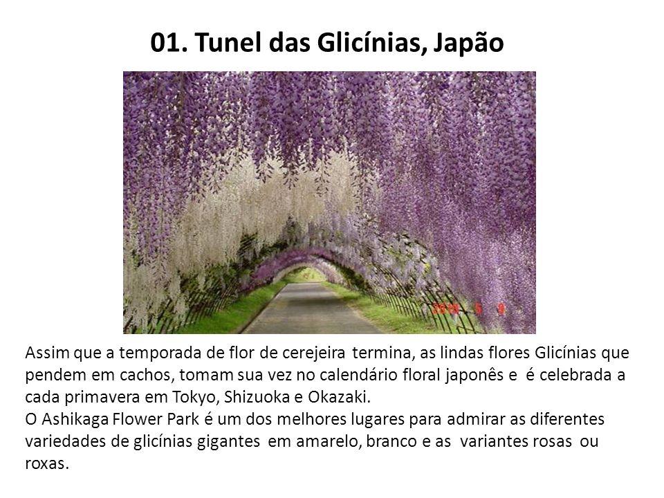01. Tunel das Glicínias, Japão Assim que a temporada de flor de cerejeira termina, as lindas flores Glicínias que pendem em cachos, tomam sua vez no c