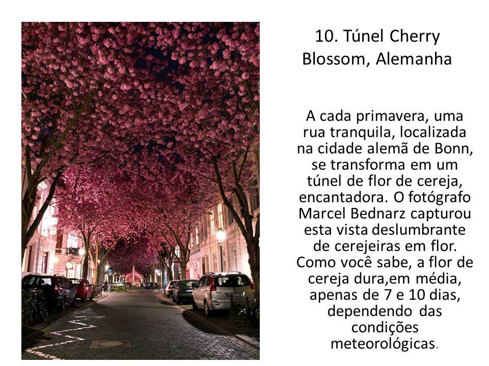 10. Túnel Cherry Blossom, Alemanha A cada primavera, uma rua tranquila, localizada na cidade alemã de Bonn, se transforma em um túnel de flor de cerej