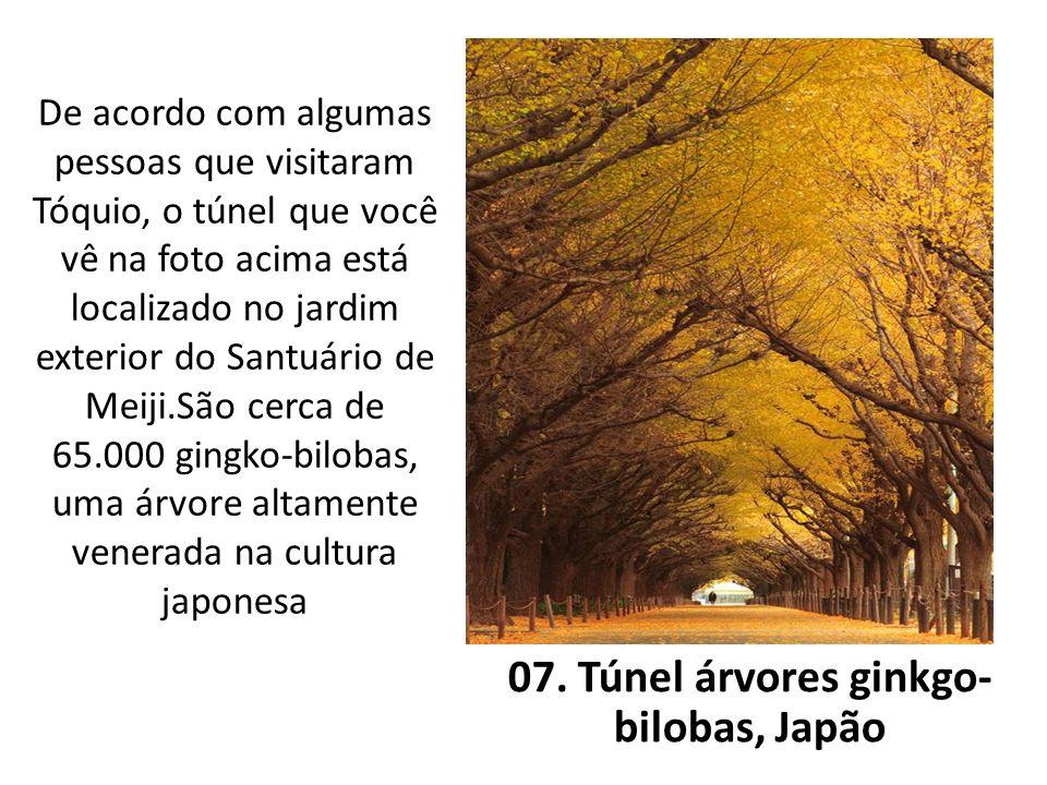 De acordo com algumas pessoas que visitaram Tóquio, o túnel que você vê na foto acima está localizado no jardim exterior do Santuário de Meiji.São cer