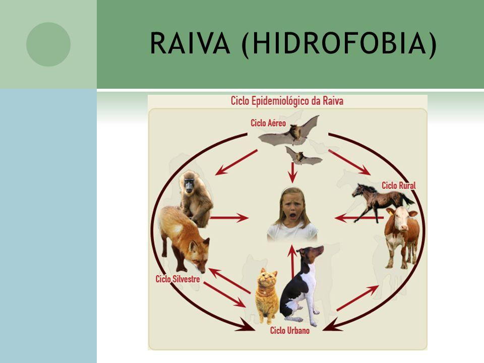 RAIVA (HIDROFOBIA)
